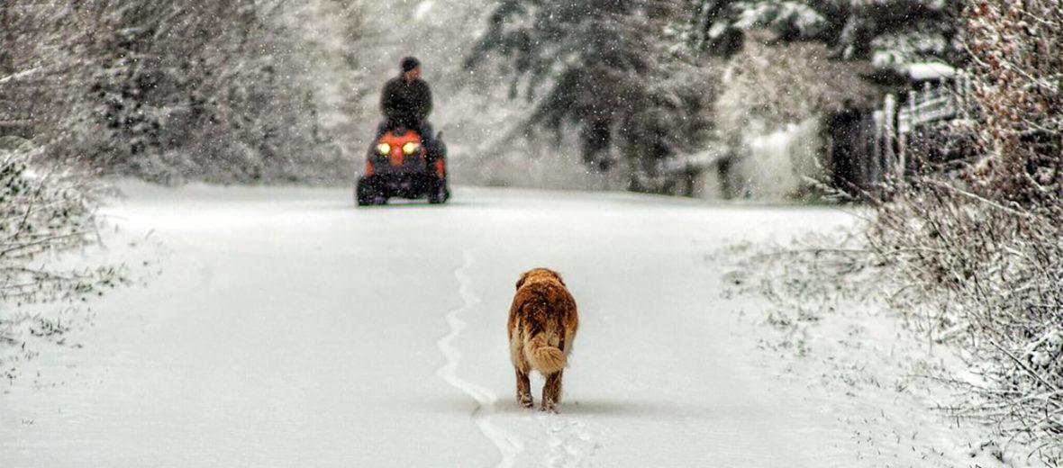 Schnee in Niendorf