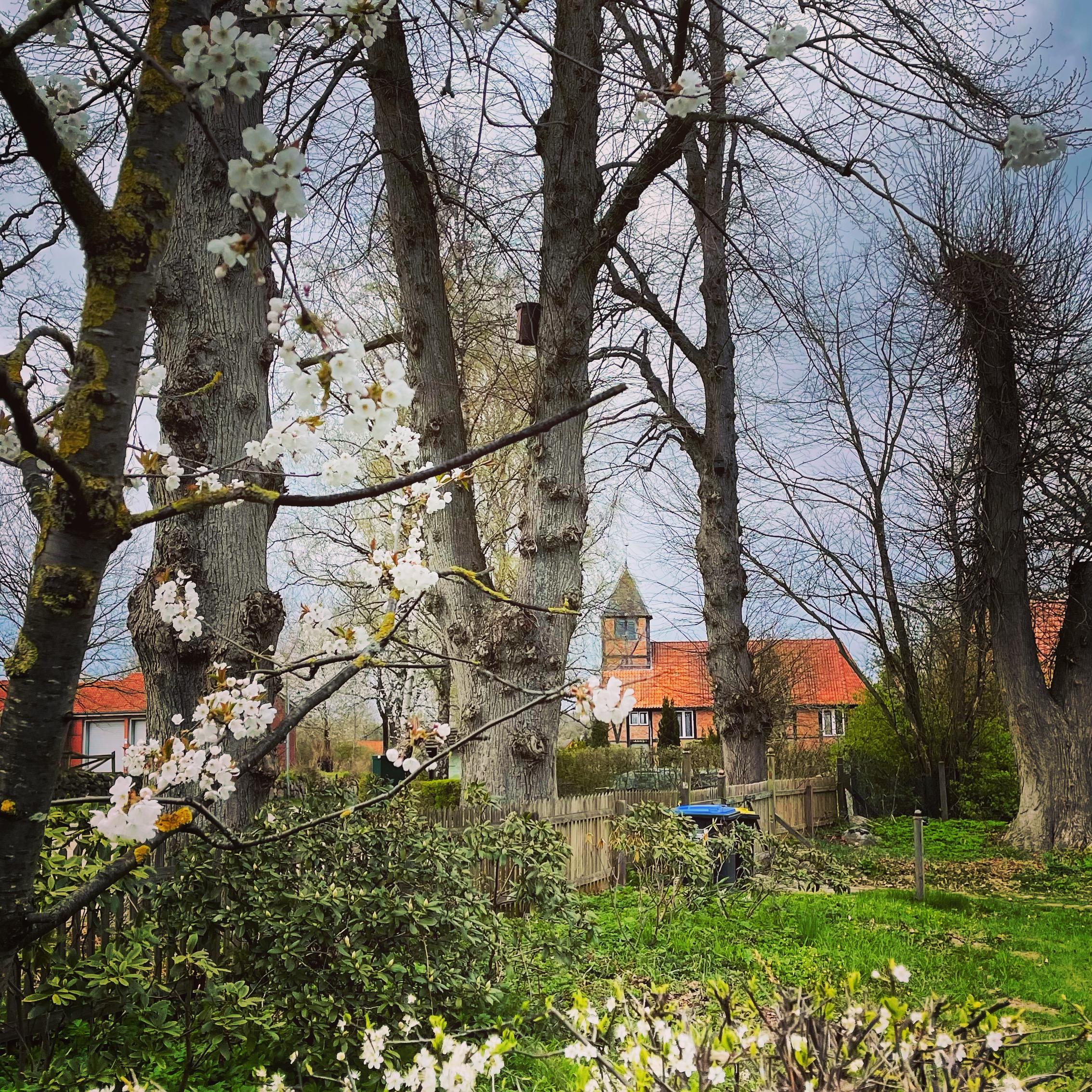 Frühling in Niendorf